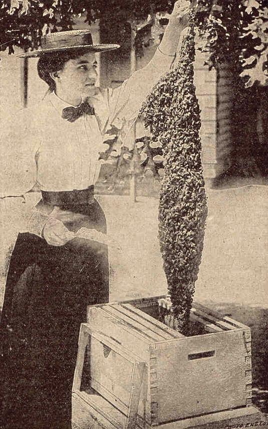 Bad Beekeeping.