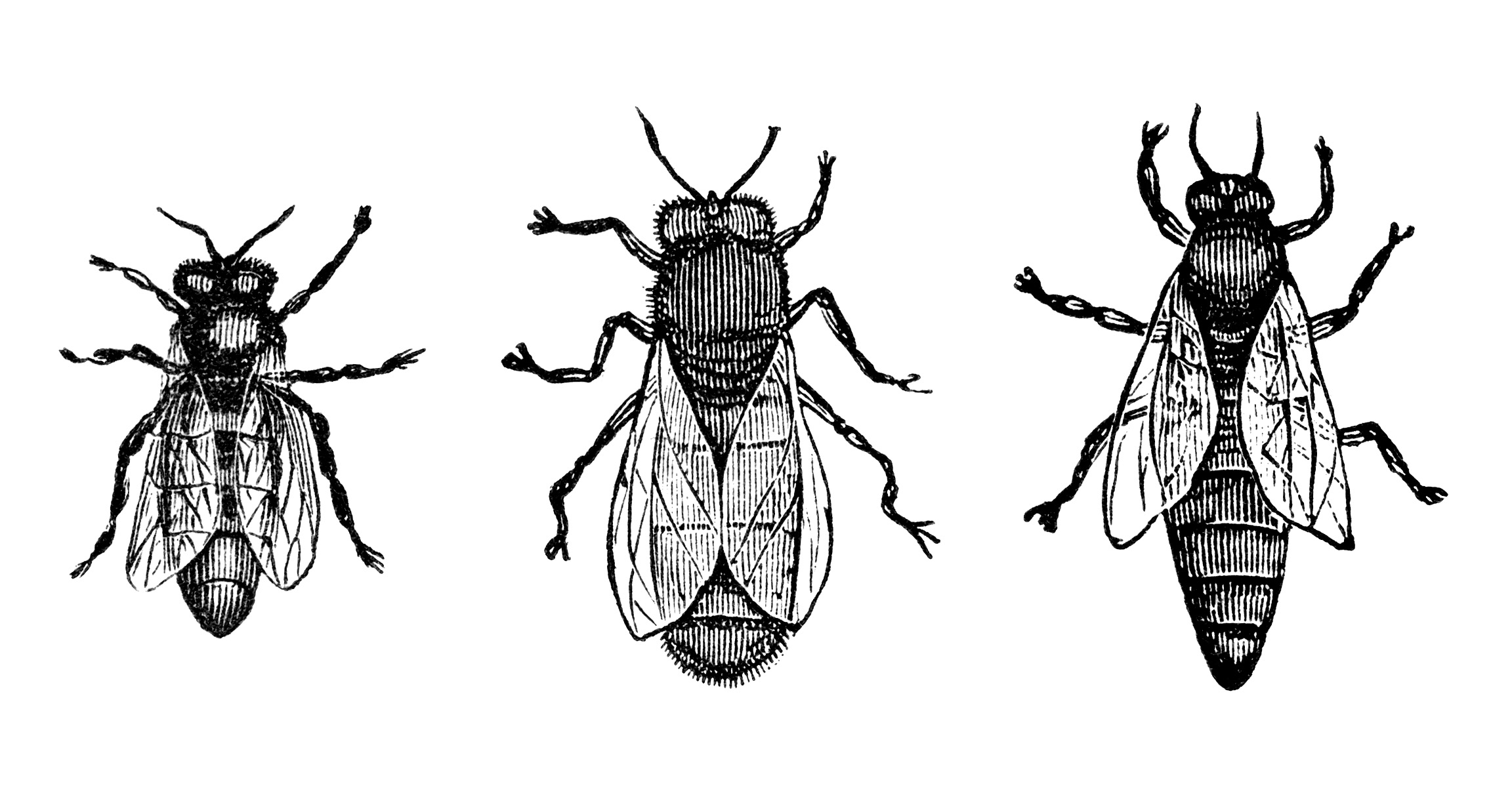 Vintage Bee Clipart Black And White