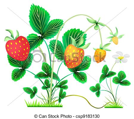 Stock Illustration of strawberry bushes with berries and flower.