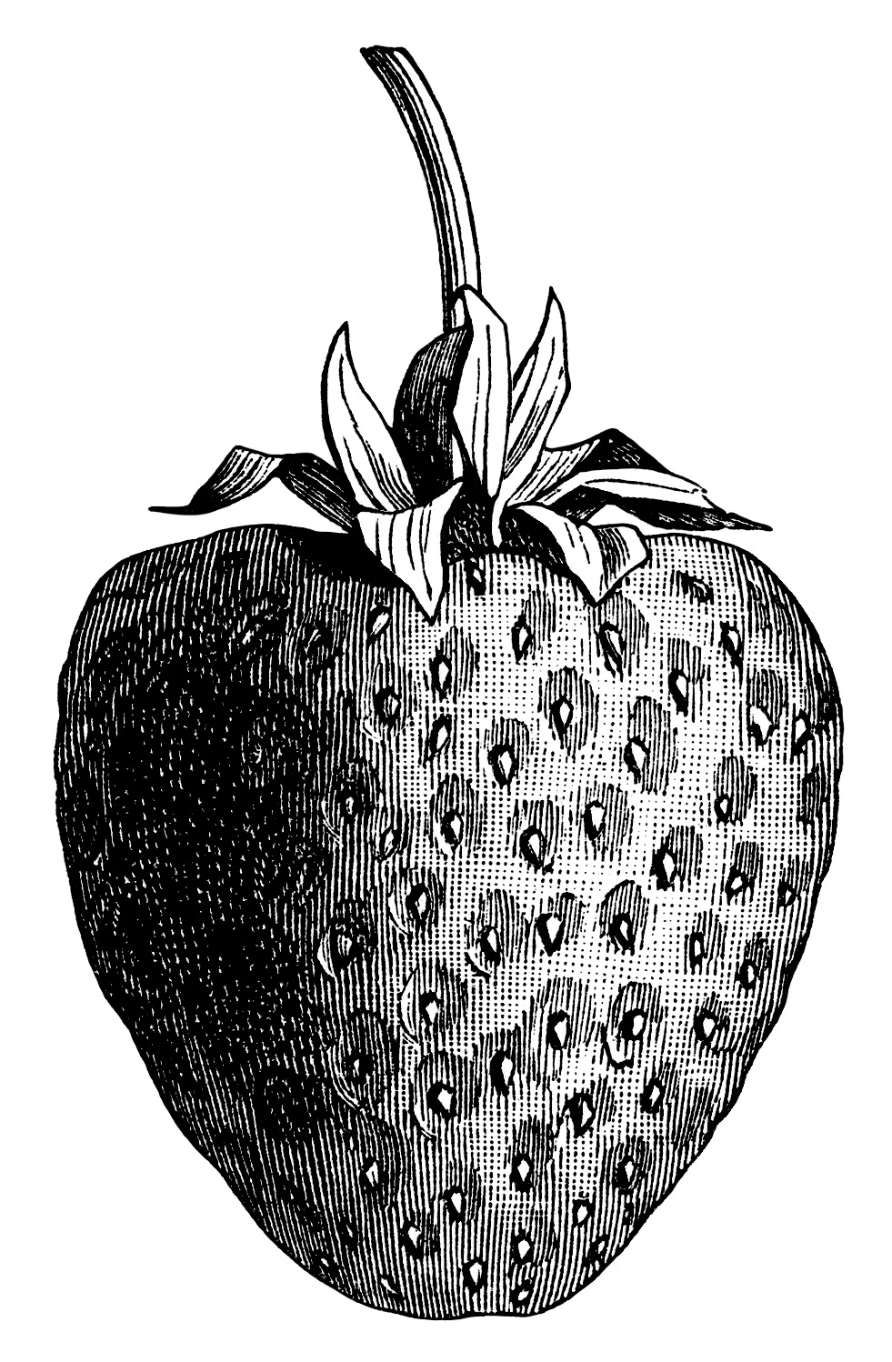 vintage strawberry clip art, black and white graphics, strawberry.