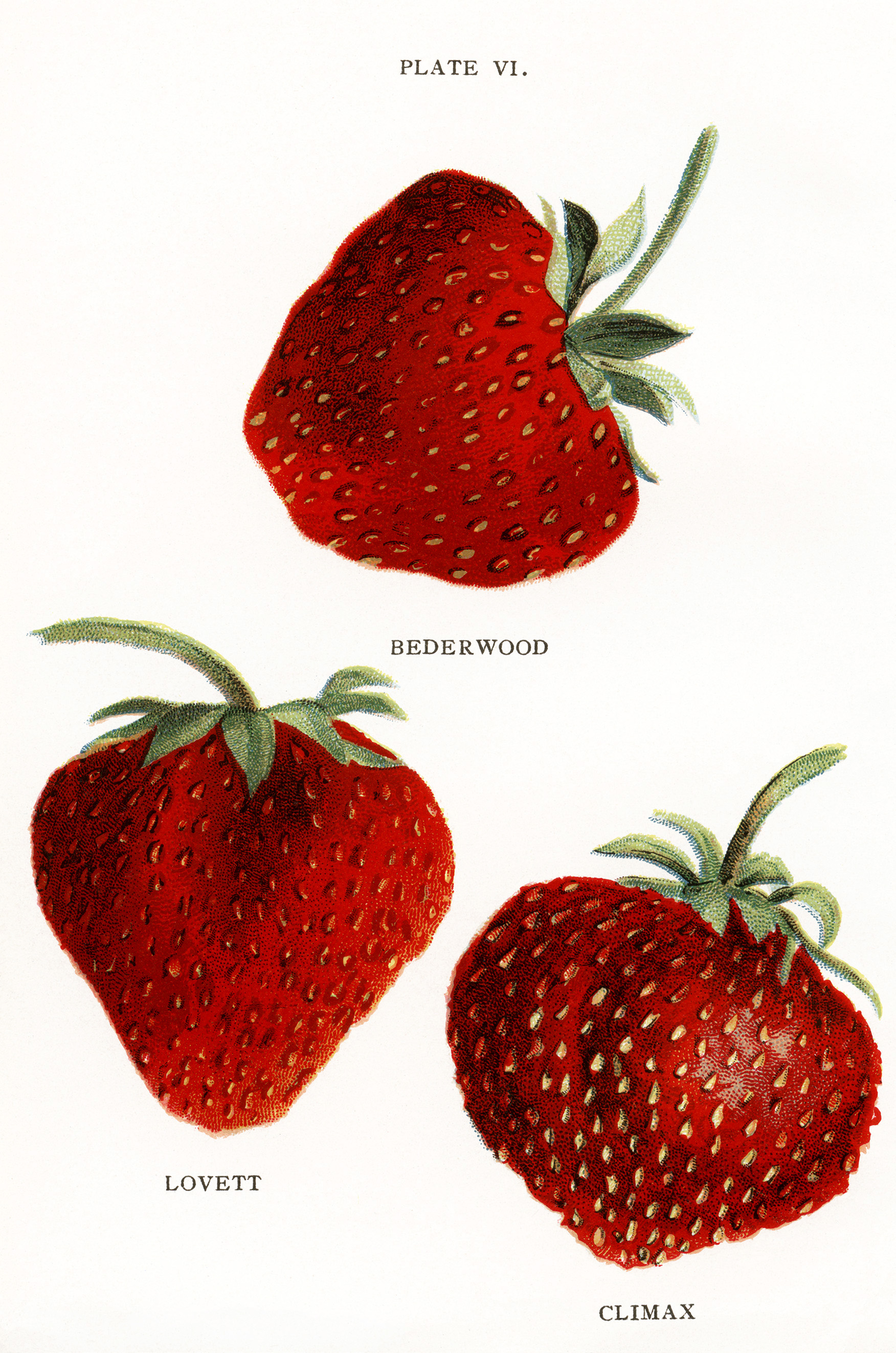 Pictures Of Strawberries.