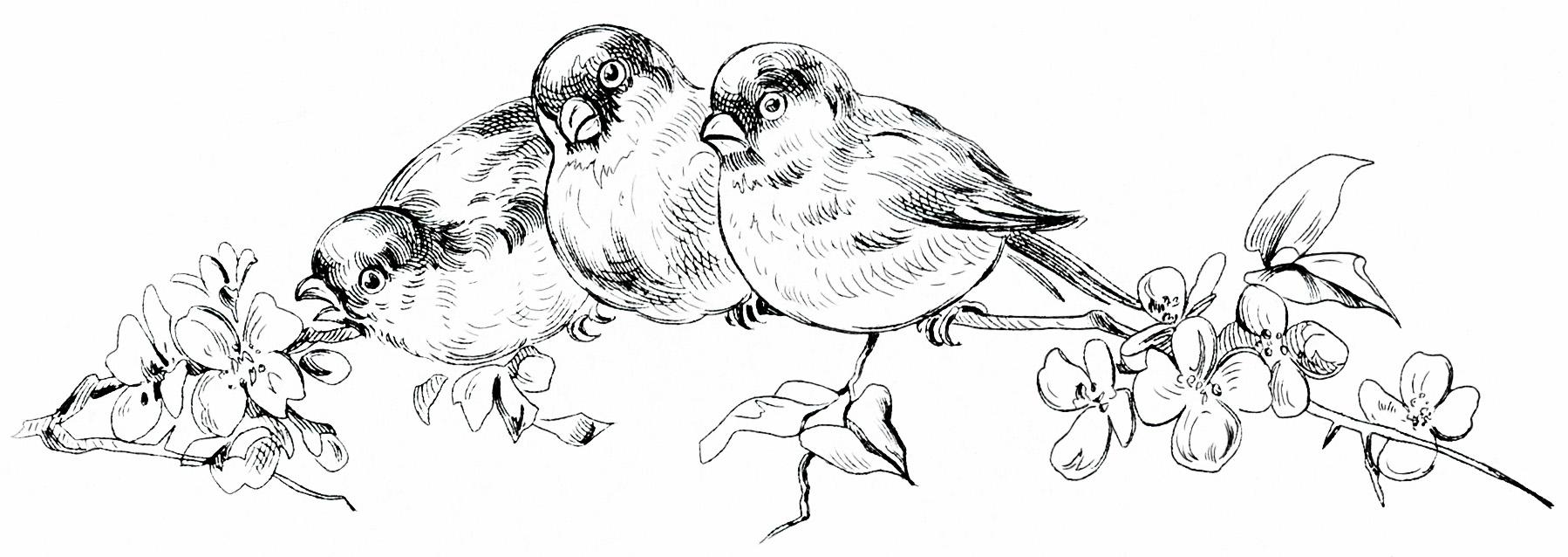 Old Design Shop ~ free digital image: birds perched on flowering.