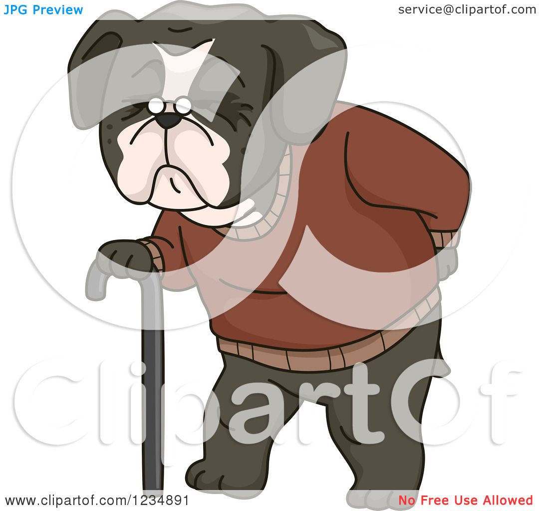 Clipart of an Old Boston Terrir Dog Walking with a Cane.