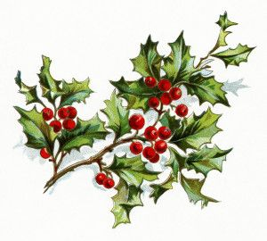 vintage christmas flower, holly and berries image, vintage.