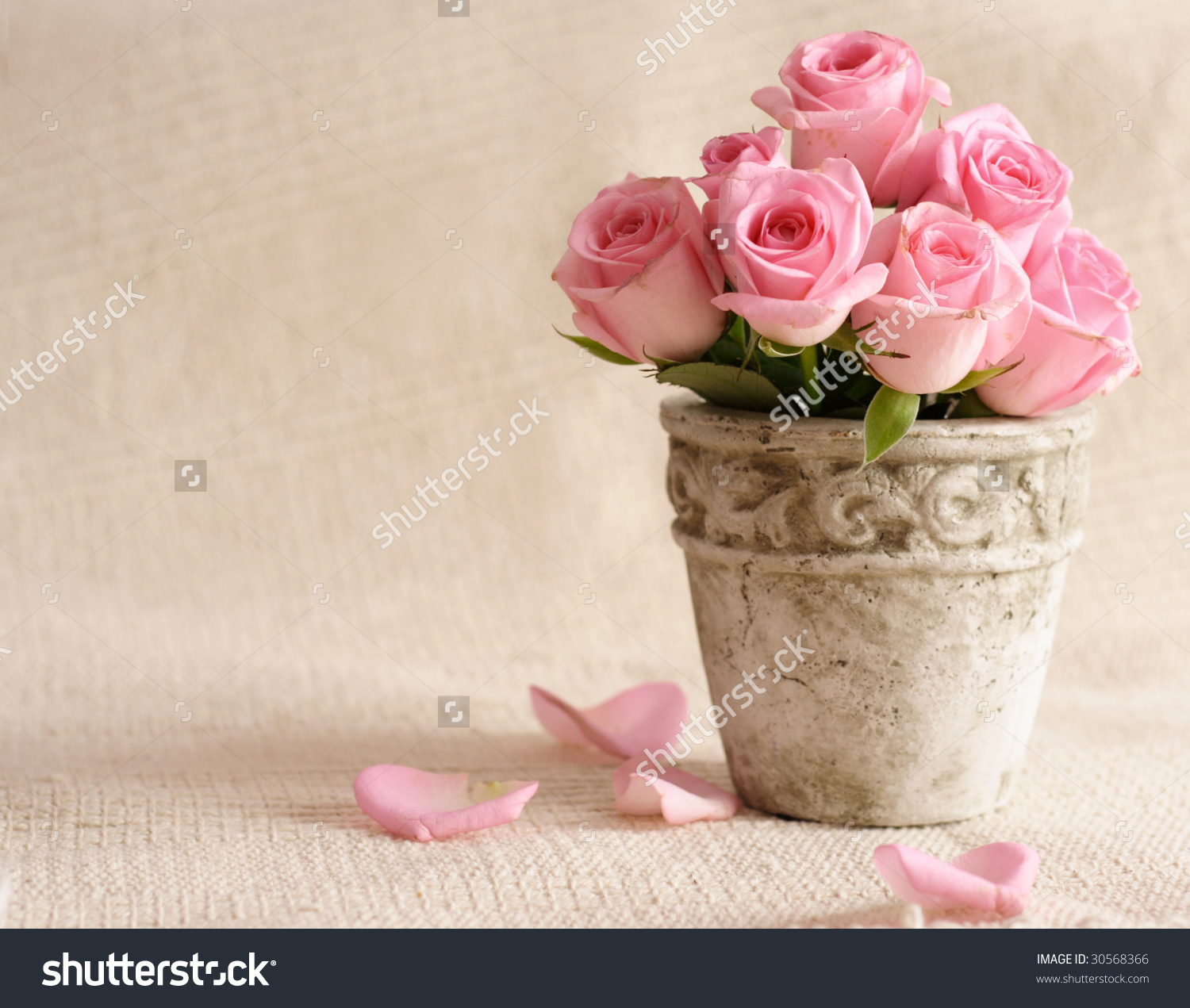 Rose Flowers Oldfashioned Flower Pot Stock Photo 30568366.