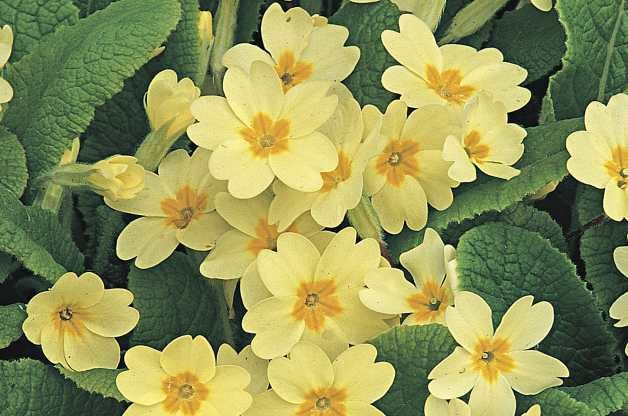 Top 10 Old Fashioned Flowers.