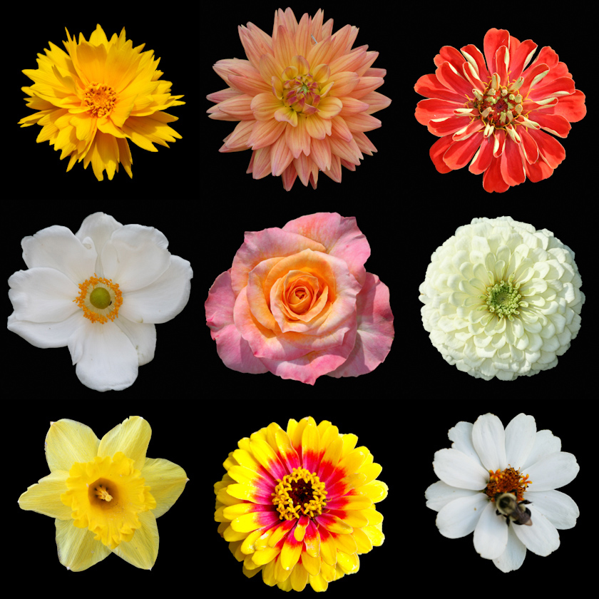 Old Fashioned Flowers Pictures.