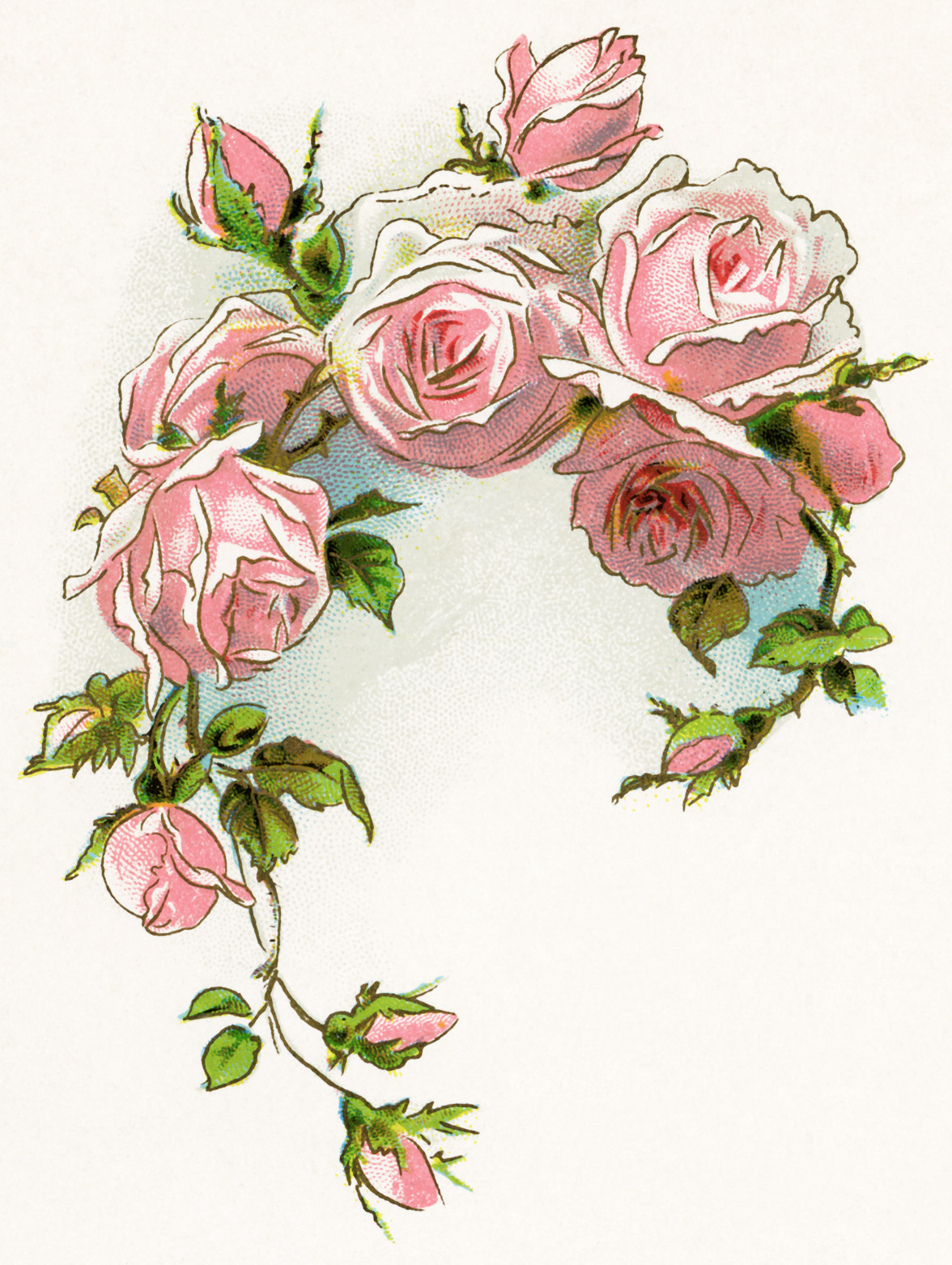 old world roses clipart