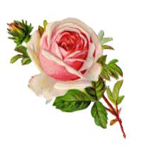 Vintage Rose Png.