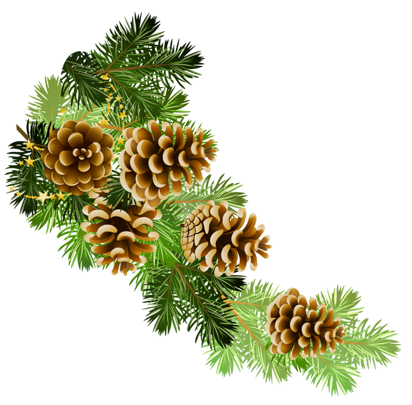 Pine and pine cones branch border clip art.