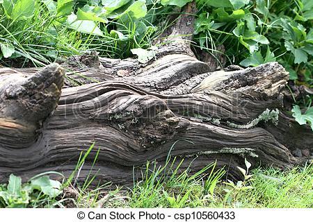 Stock Photos of Old Log at Paradise Creek.