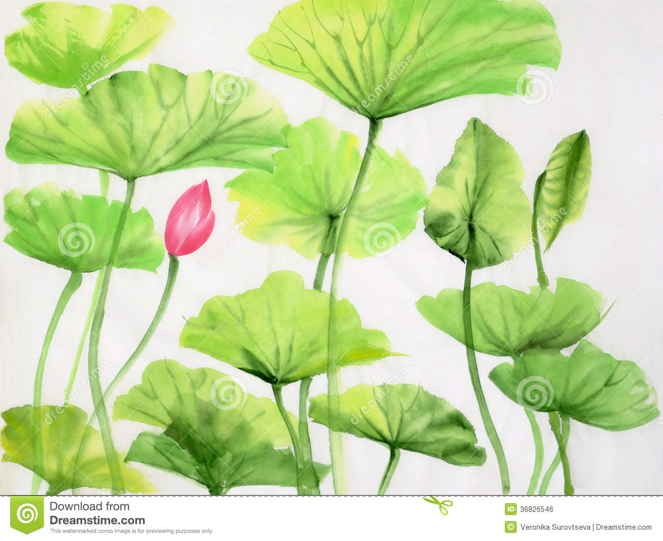 Watercolor Painting Of Lotus Leaves And Flower Royalty Free Stock.
