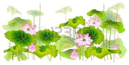 Lotus Leaf Stock Photos & Pictures. Royalty Free Lotus Leaf Images.