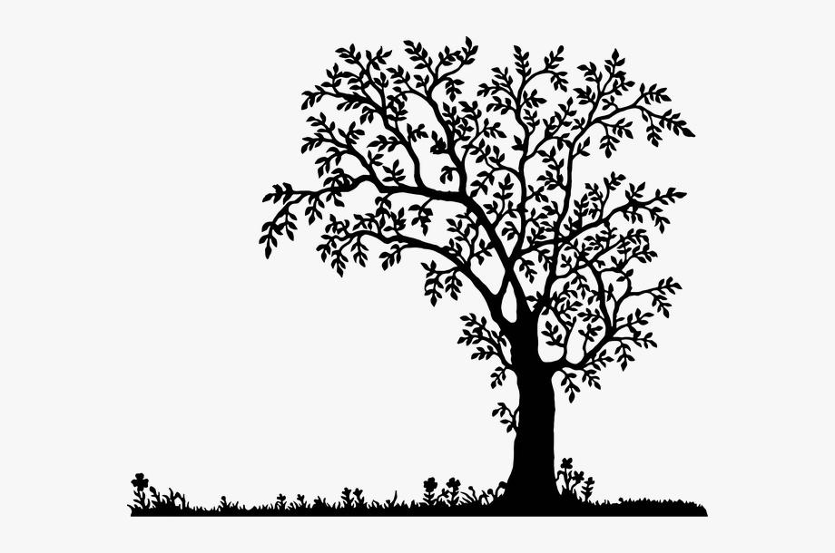 Oak Tree Silhouette, Landscape Silhouette, Old Trees,.