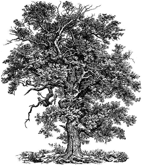 Dover publication sample in 2019.