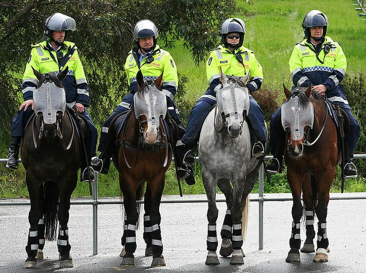 1000+ images about Police horses on Pinterest.