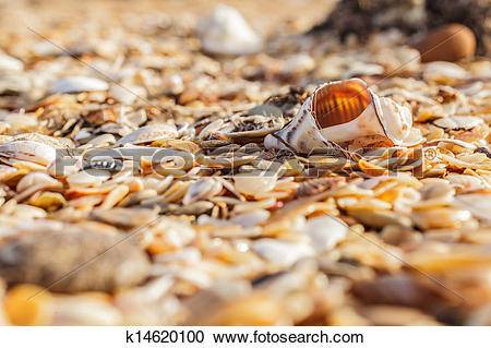 Stock Photography of Old shell Rapana k14620100.