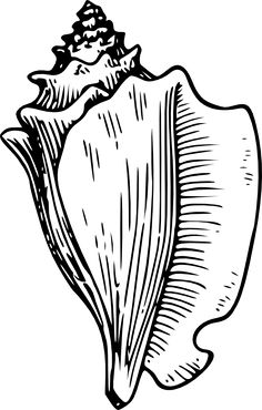 Shell Clip Art Black and White.