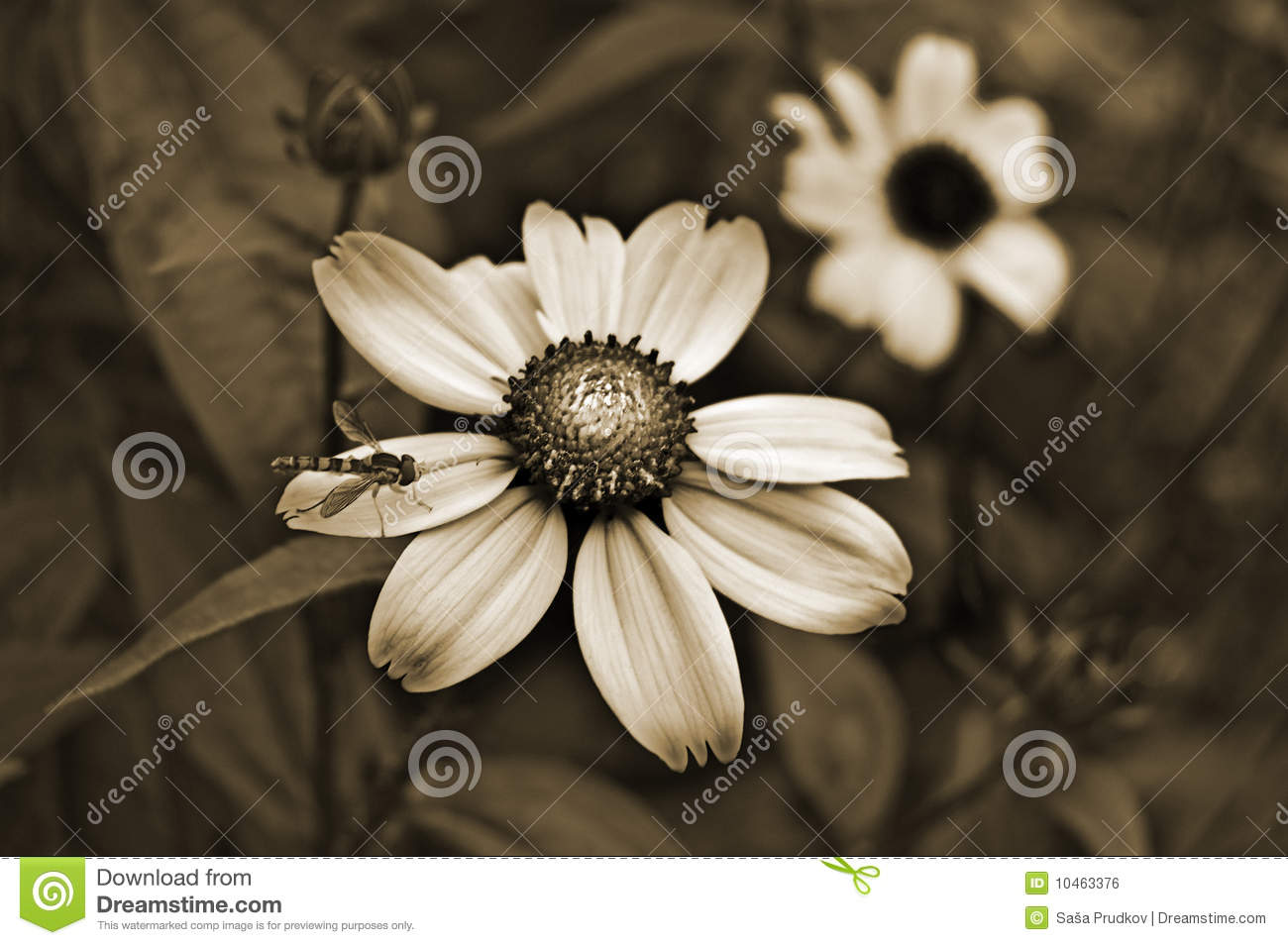 Old Style Sepia Flowers Royalty Free Stock Image.