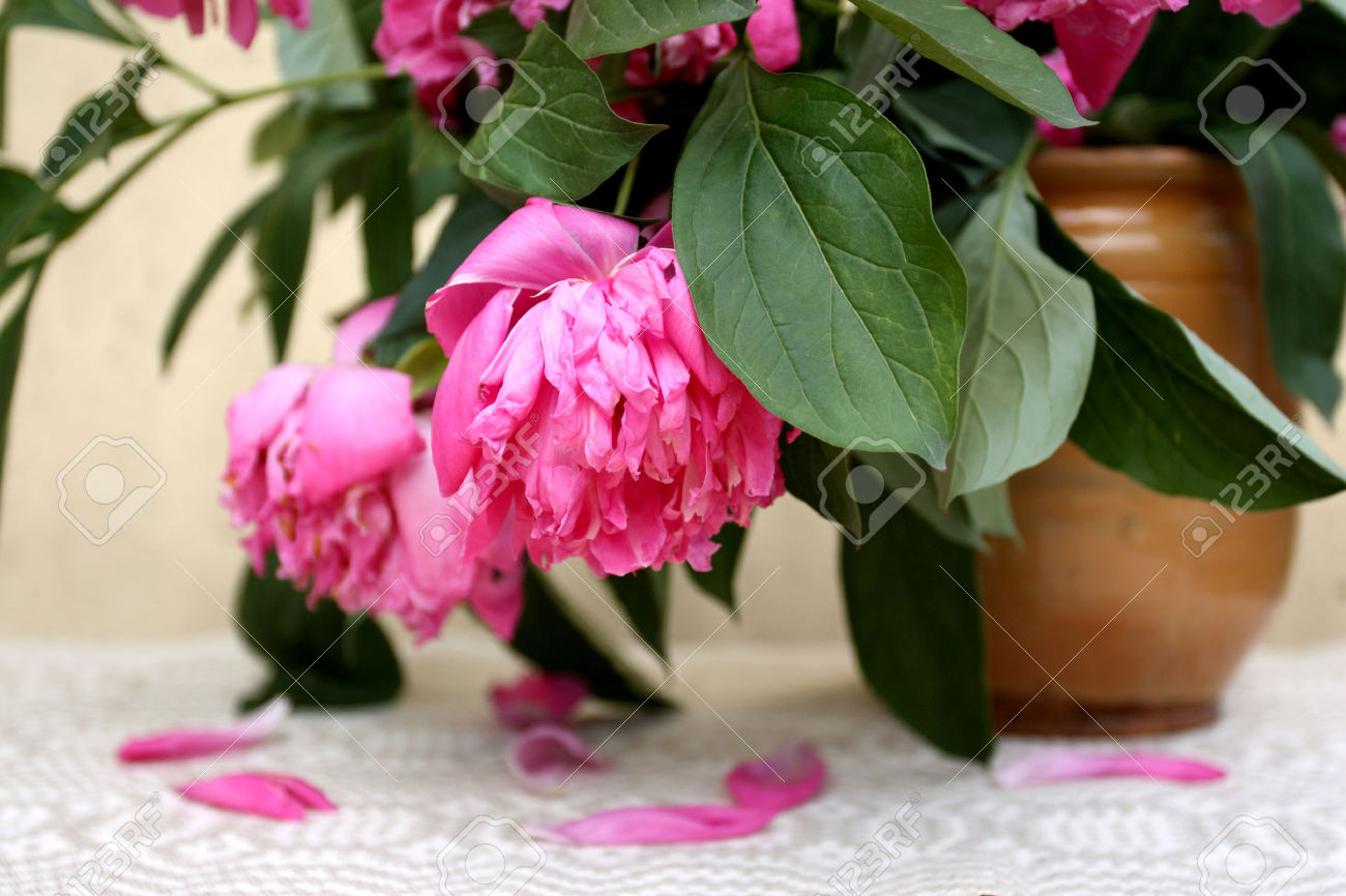 Wilting Big Pink Flowers In An Old Style Clay Pot On The Table.
