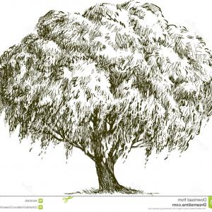 Exclusive Black And White Willow Tree And A Fox Clipart Draw.