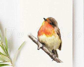 Robin clipart.