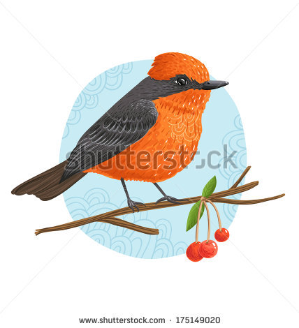 Flycatchers Stock Photos, Royalty.