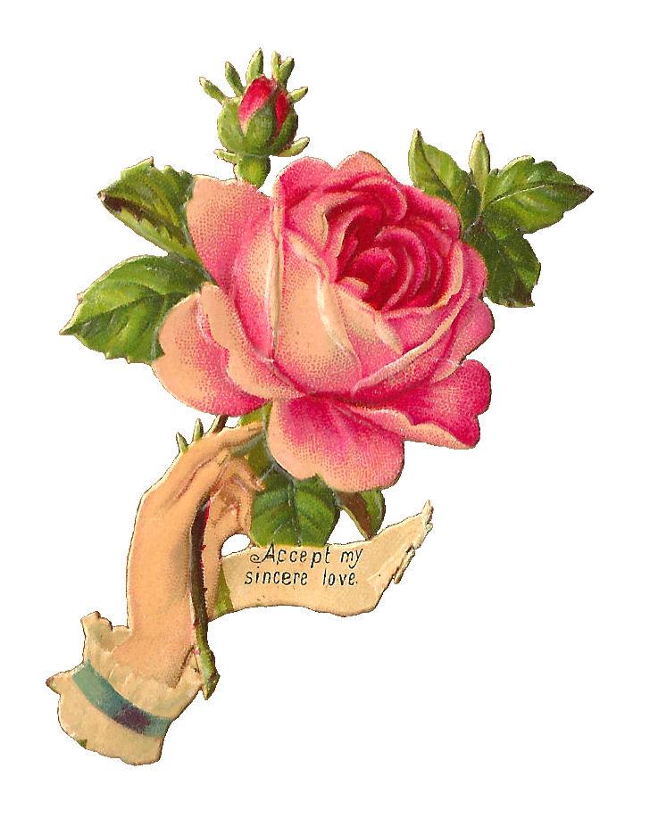 Vintage Roses Images.
