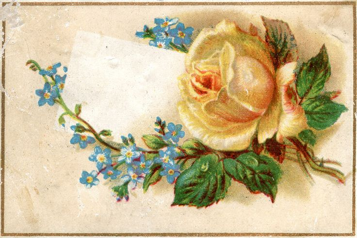 Antique roses, Clipart images and Antiques on Pinterest.