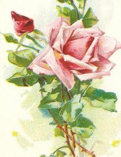 rose antique camisolas.
