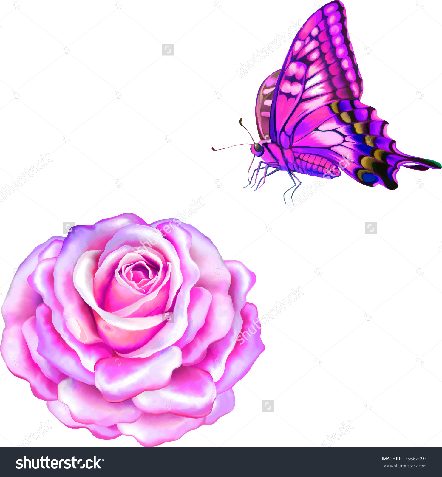 Pink Rose Flower. Old World Swallowtail (Papilio Machaon.