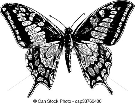 Vector Clipart of Old world swallowtail or papilio machaon.