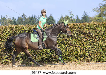 Picture of Oldenburg Horse. Rider on bay mare wearing protective.
