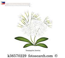 Oleaceae Clip Art Vector Graphics. 18 oleaceae EPS clipart vector.