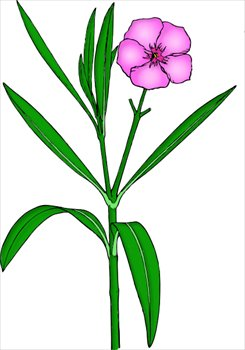 Free oleander Clipart.