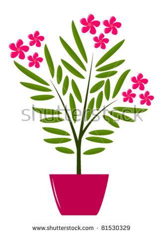 Oleander Flower Stock Photos, Royalty.