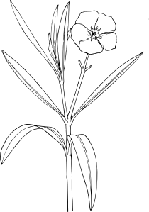 Flower Bush Clip Art at Clker.com.