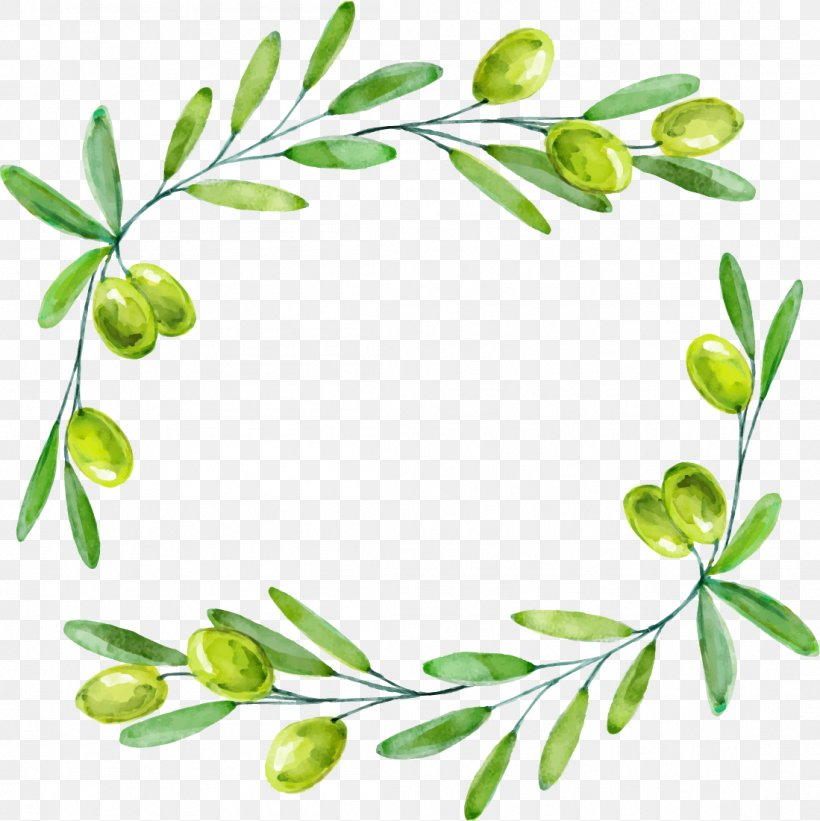 Olive Branch Euclidean Vector, PNG, 1099x1101px, Olive.