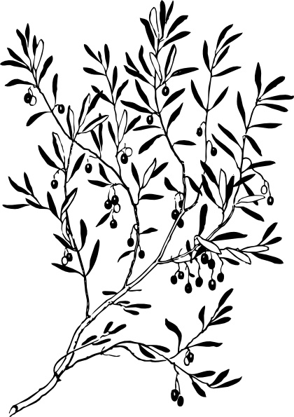 Olive Branch clip art Free vector in Open office drawing svg.