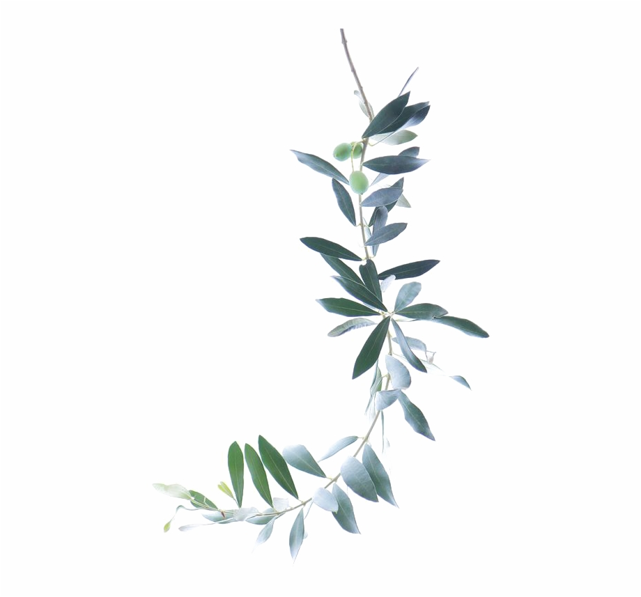 Watercolor Branch Png.