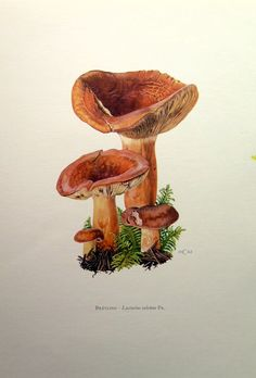 Fungi, Antiques and Mushrooms on Pinterest.