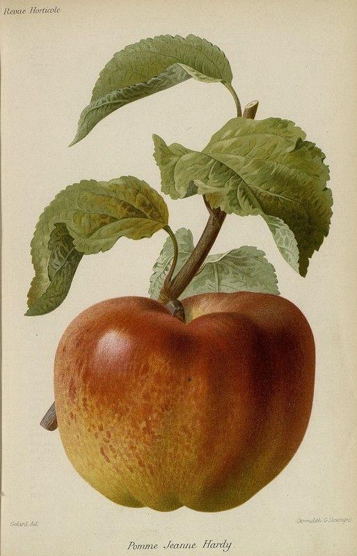 1000+ images about Botanical prints on Pinterest.