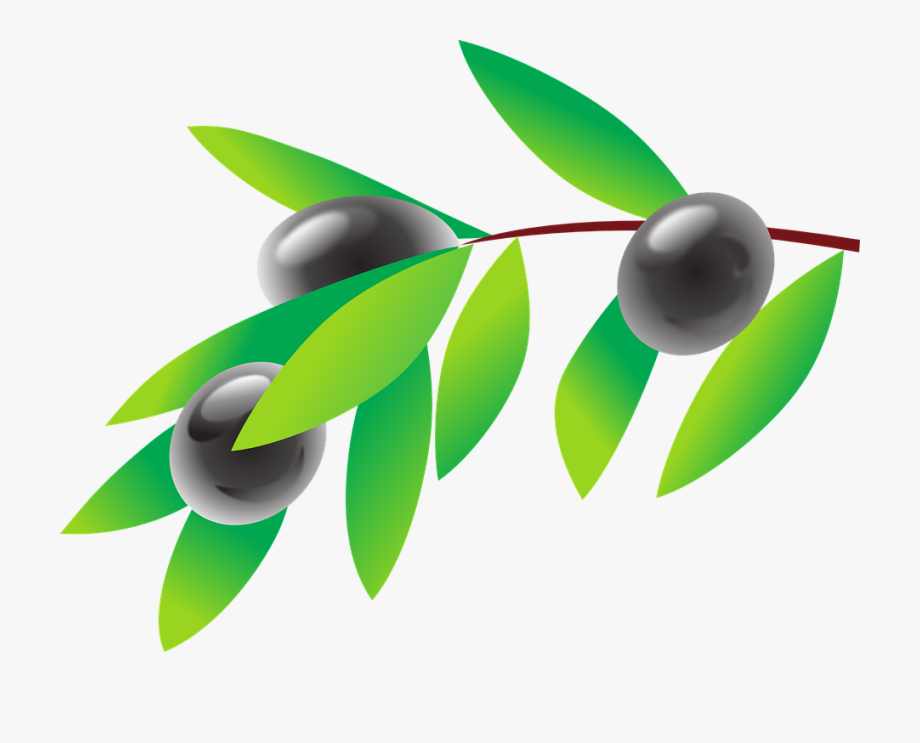 Olive Branch Oil.