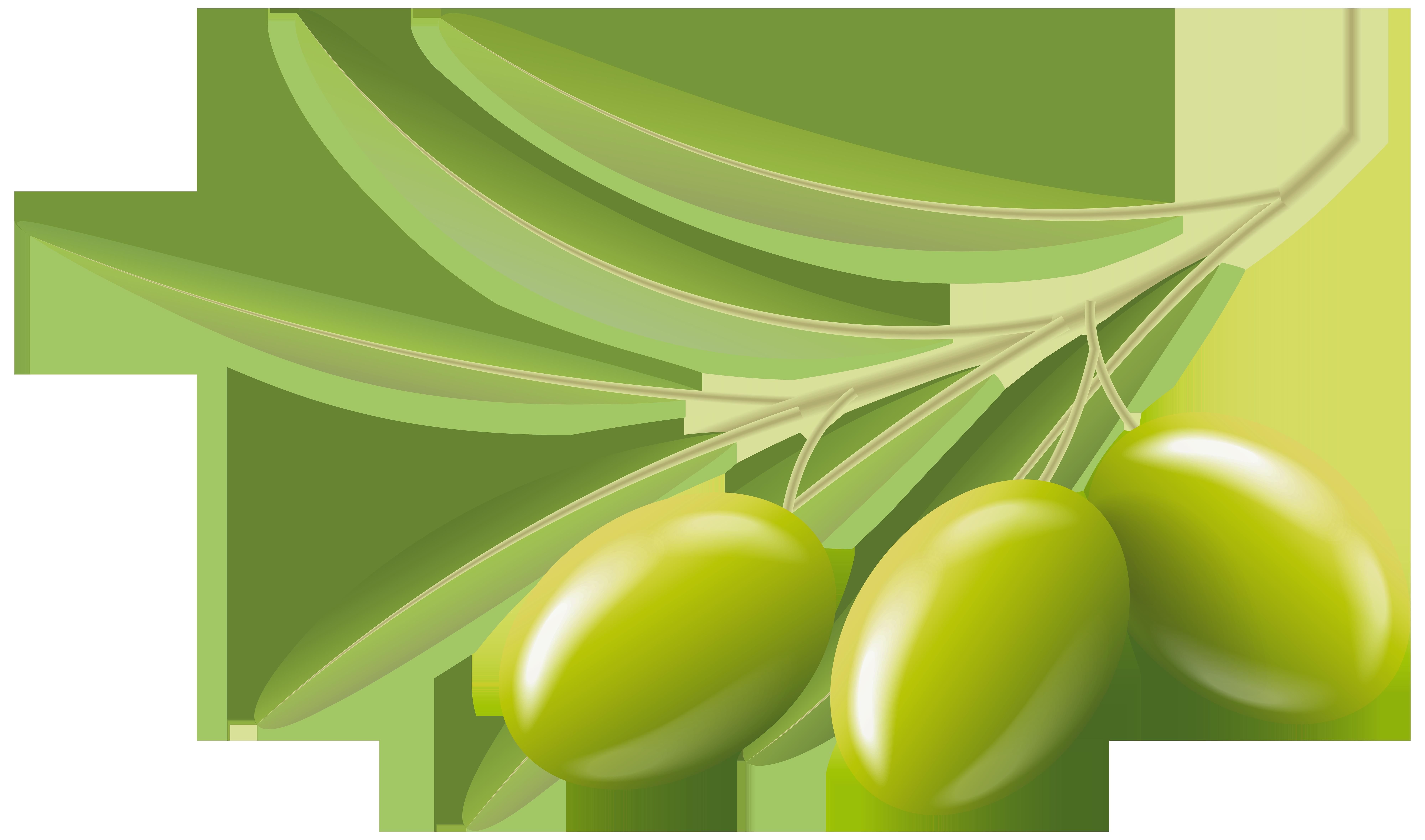 Green Olives Transparent Clip Art Image.