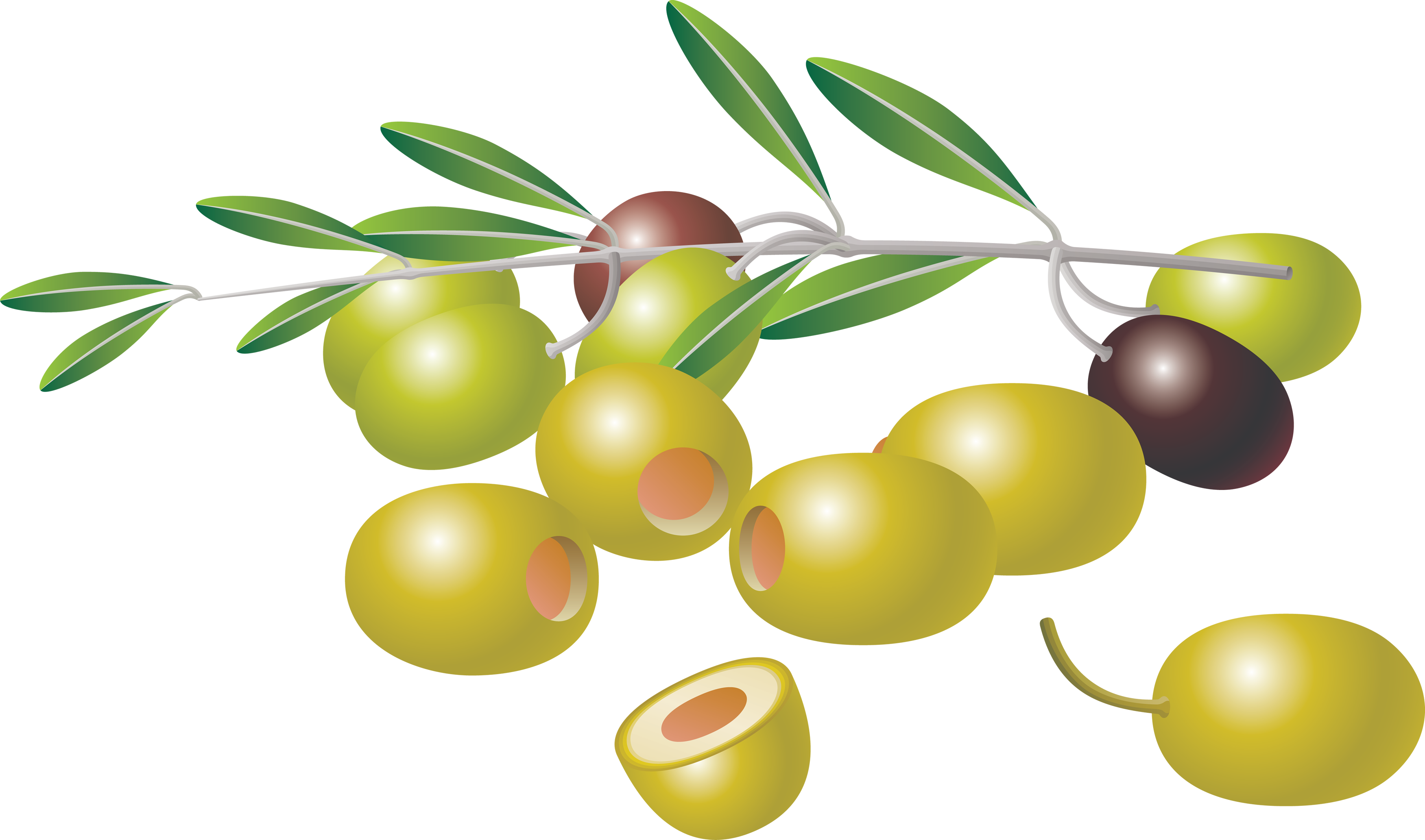 Olives images free olive clip art.
