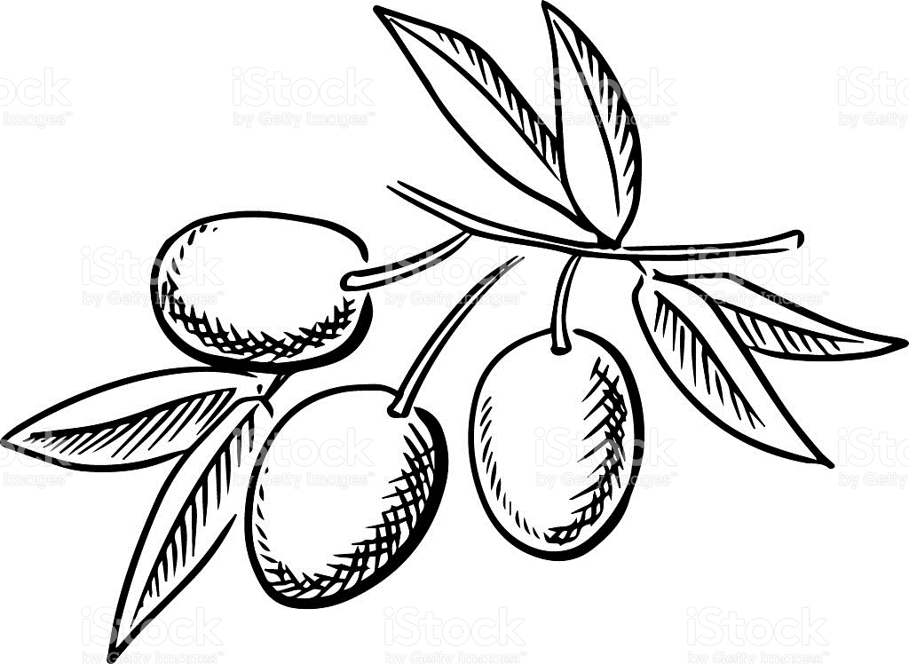 1541 Olive free clipart.