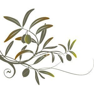 1000+ images about Olive tree design on Pinterest.