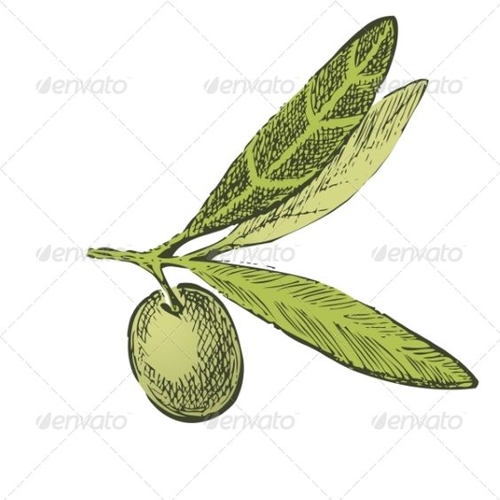 Hand Drawn Olive Branch  agriculture, branch, crop, cuisine.