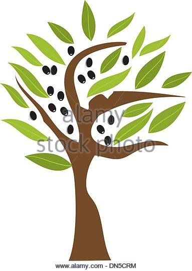Olive Tree Stock Photos & Olive Tree Stock Images.