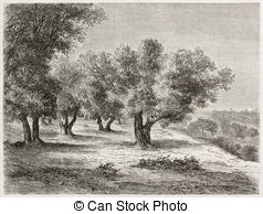 Olive grove Clipart and Stock Illustrations. 243 Olive grove.